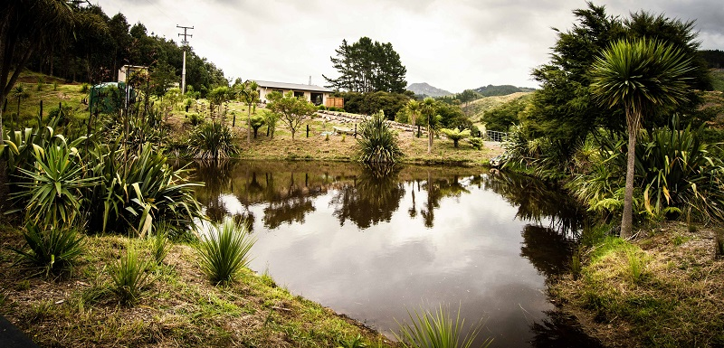 The view of the pond and cottage from the Wedding Venue